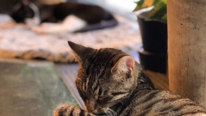 Java Whiskers Cat Cafe Review: The Purrfect Solution to Uni Burnout