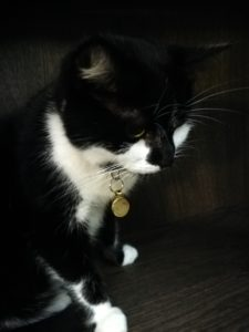 Dotty, one of the cats currently staying at Java Whiskers.